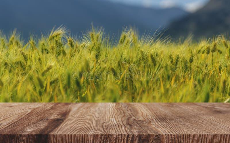 Уши пшеницы field предпосылка, зеленый урожай пшеницы с деревянным полом стоковые изображения rf