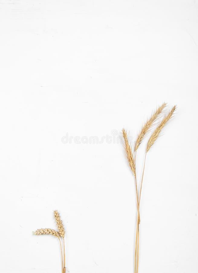 Уши хлопьев на белой предпосылке Уши пшеницы и рож r стоковые фото