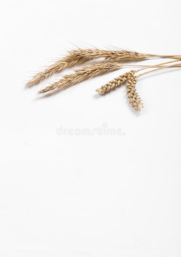 Уши хлопьев на белой предпосылке Уши пшеницы и рож r стоковая фотография rf