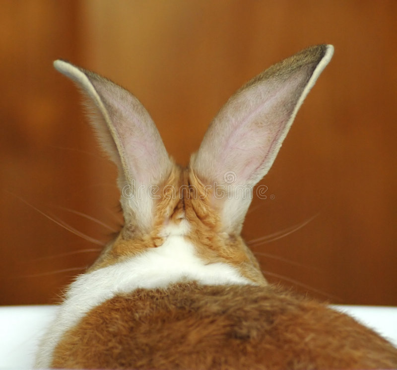 уши s зайчика стоковое изображение