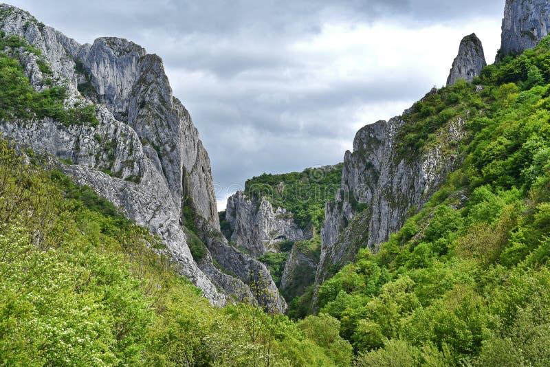 Ущелье Cheile Turzii, природный заповедник, Румыния стоковое фото rf