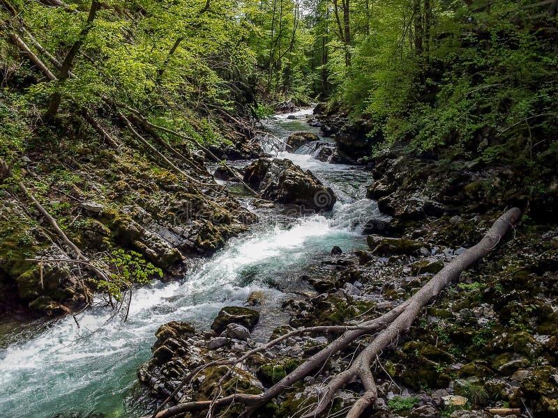 Ущелье Vintgar - кровоточенная драгоценность природы, Словения стоковые фотографии rf