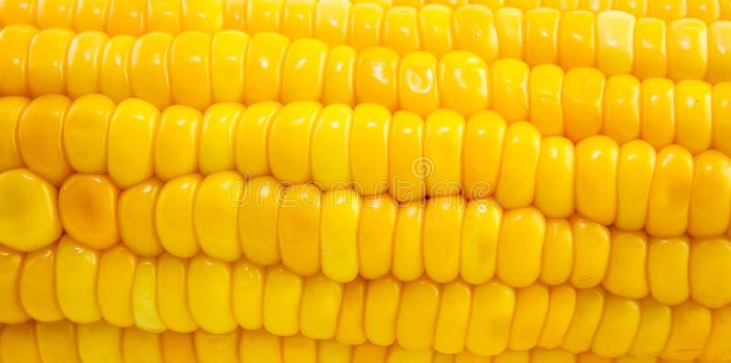 Удар желтой сладостной зрелой сырцовой мозоли стоковое изображение rf
