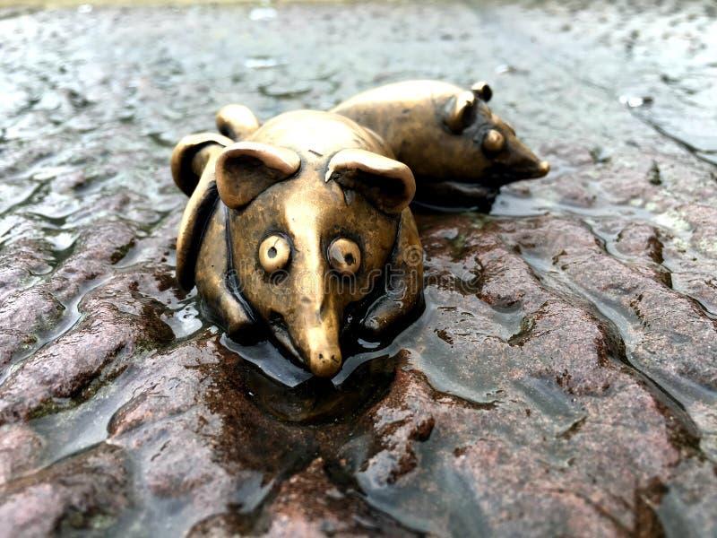 Удачливая мышь на стороне реки городка Гейдельберга старого стоковая фотография rf