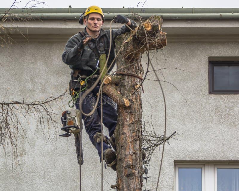 Удаление дерева стоковое изображение rf