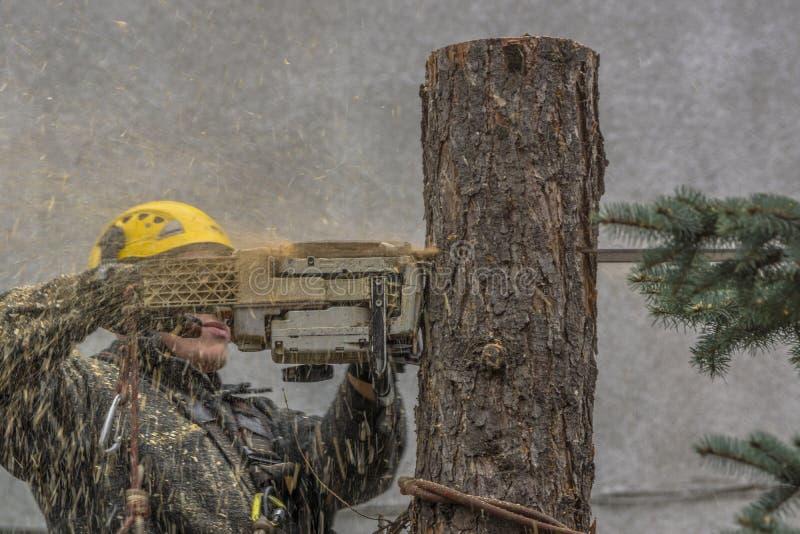Удаление дерева стоковые изображения rf
