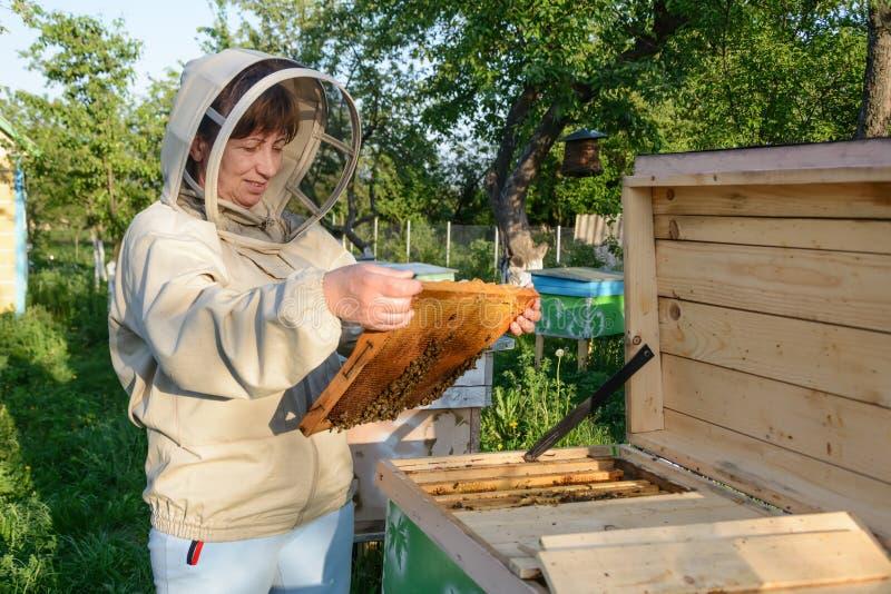 Улей женщины Beekeeper контролируя и рамка гребня Apiculture стоковое фото rf