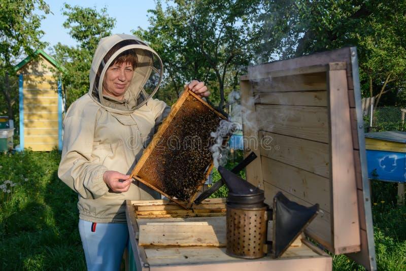 Улей Beekeeper контролируя и рамка гребня Apiculture стоковая фотография