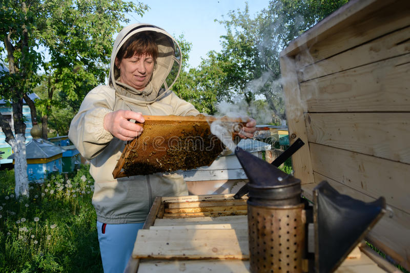 Улей Beekeeper контролируя и рамка гребня Apiculture стоковые изображения rf