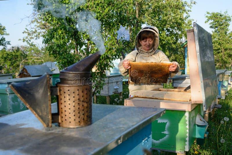 Улей Beekeeper контролируя и рамка гребня Apiculture стоковое изображение