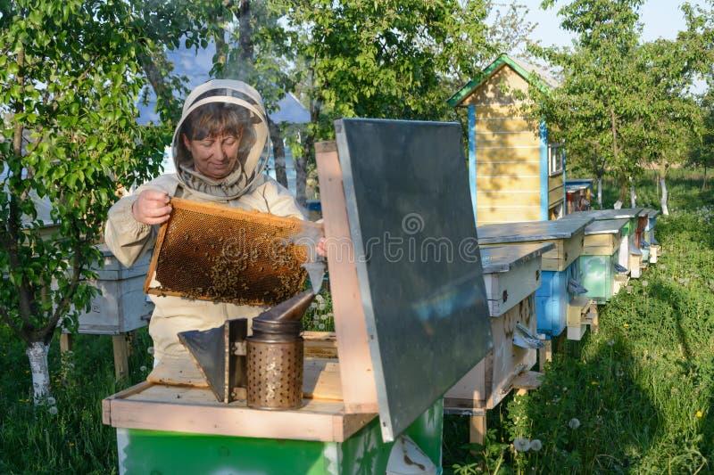 Улей Beekeeper контролируя и рамка гребня Apiculture стоковое фото rf