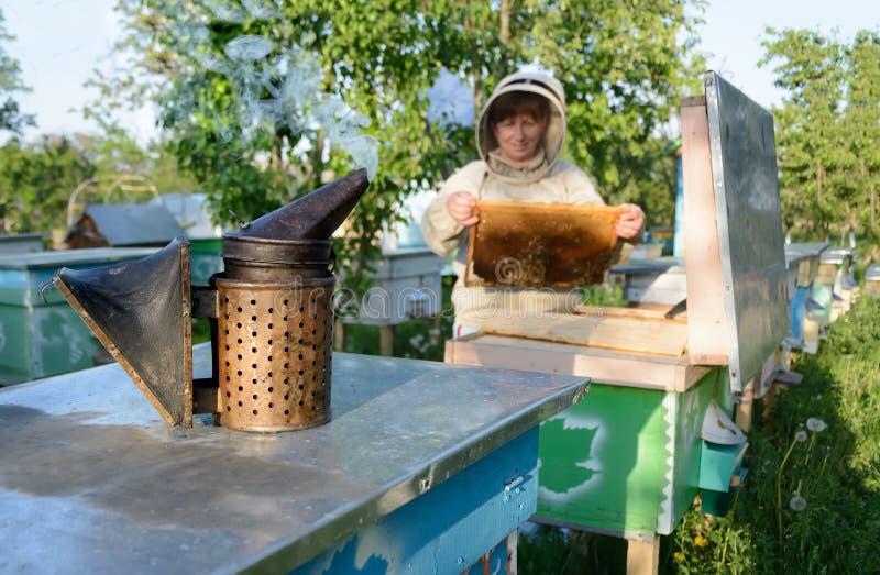 Улей Beekeeper контролируя и рамка гребня Apiculture стоковые фото