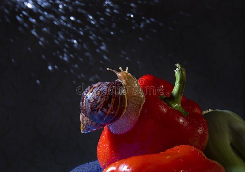 Улитка в дожде стоковая фотография