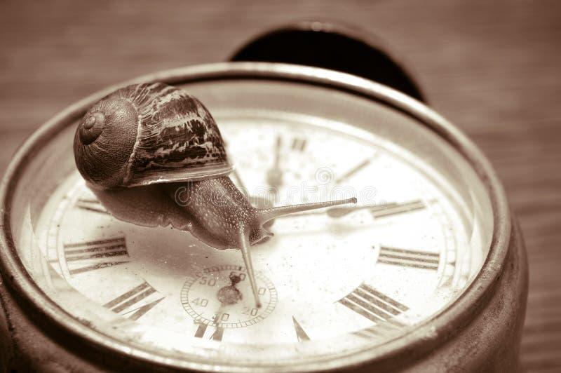 Улитка и часы земли, в тоне sepia стоковое изображение rf