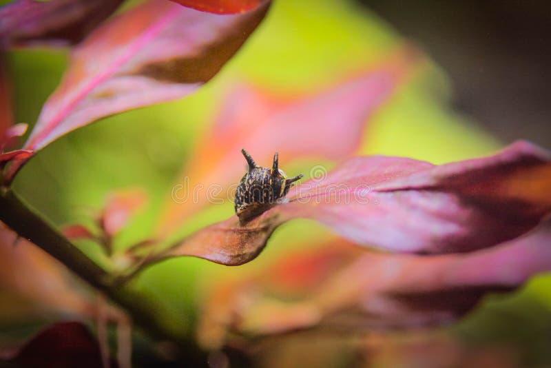 Улитка на листьях стоковое фото