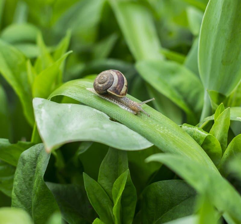 Улитка на лист в саде стоковые фото