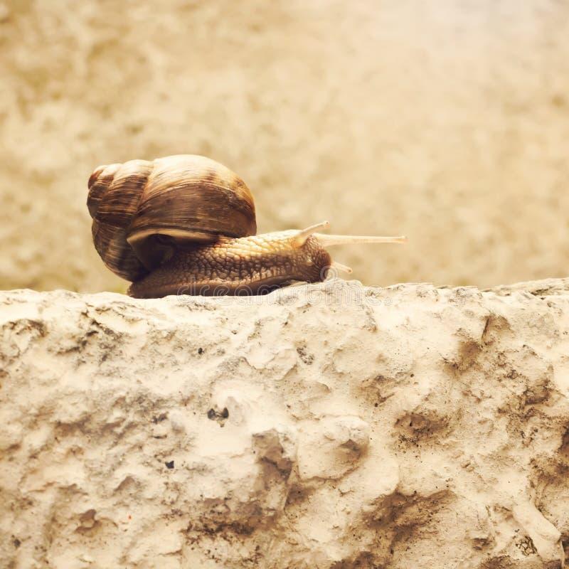 Улитка на камне стоковое фото rf