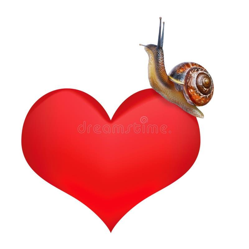Улитка на сердце стоковое изображение rf