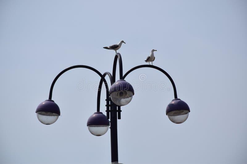 улица моря светильника чайки стоковое изображение rf