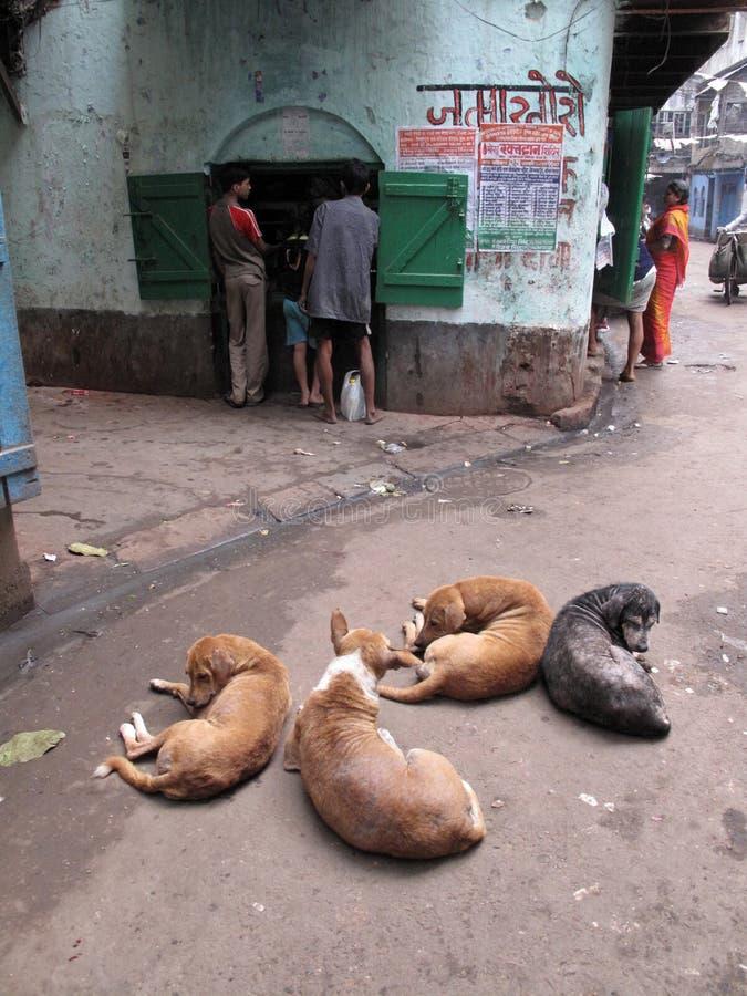 улицы kolkata попроек Бездомные собаки спят в улице стоковое фото