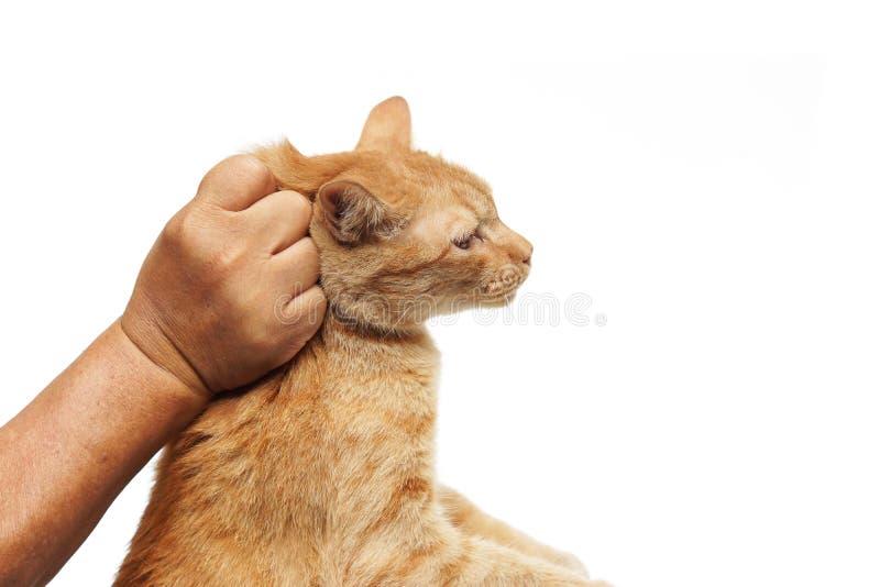 Уловите кота стоковое изображение