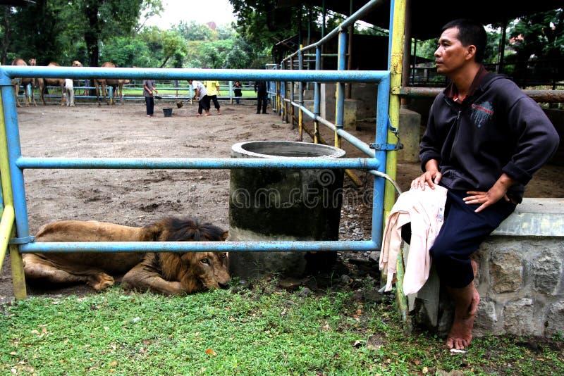 Уловите льва стоковое фото