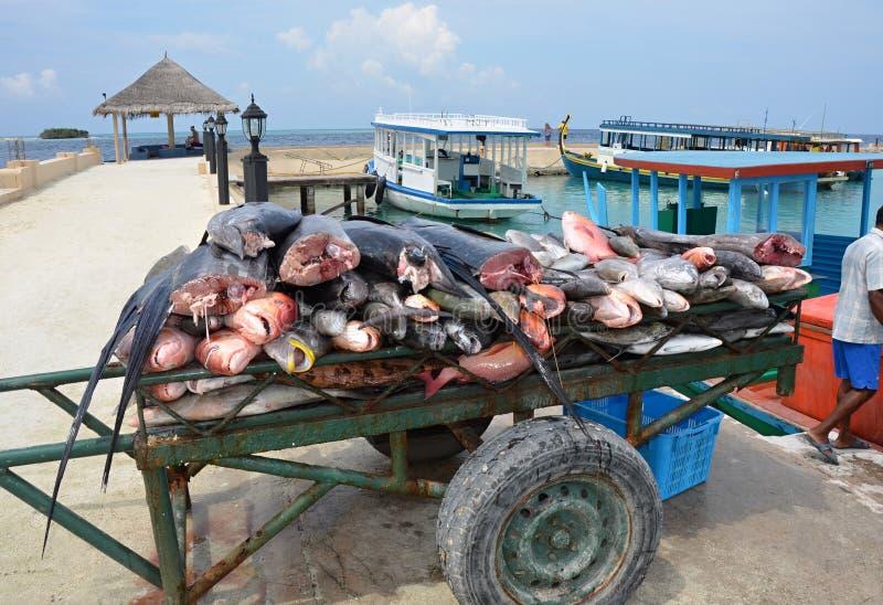 Уловленные рыбы моря - Maledives стоковое фото rf