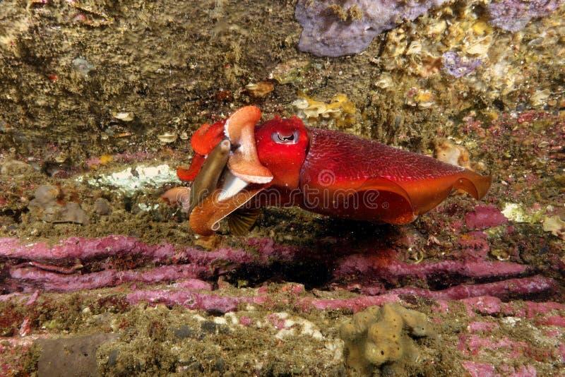 Уловленный каракатицей стоковое изображение