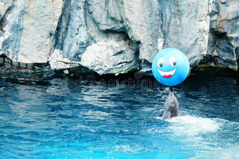 Улыбка действия выставки дельфинов стоковые фото