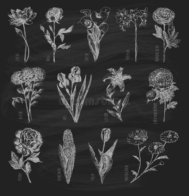 Ультрамодной цветки комплекта нарисованные рукой на доске бесплатная иллюстрация
