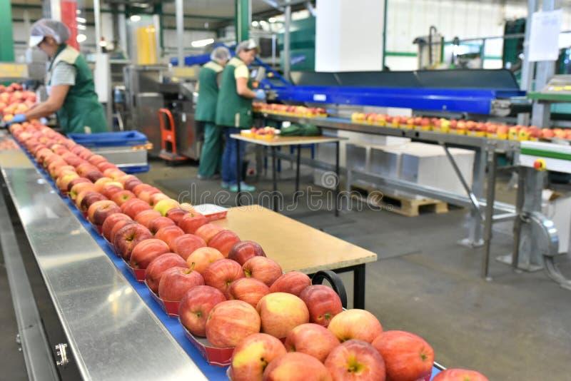 Конвейер с яблоками фольксваген транспортер автодом