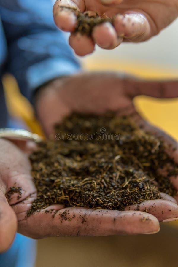 Фабрика чая стоковое изображение rf