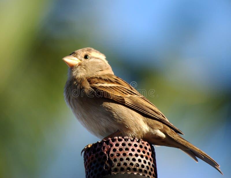 факел газа птицы стоковые изображения