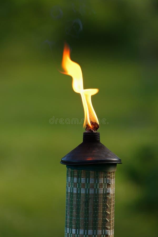 факел сада пламени крупного плана стоковая фотография rf