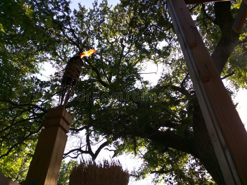 Факел шалаша на дереве стоковые фото