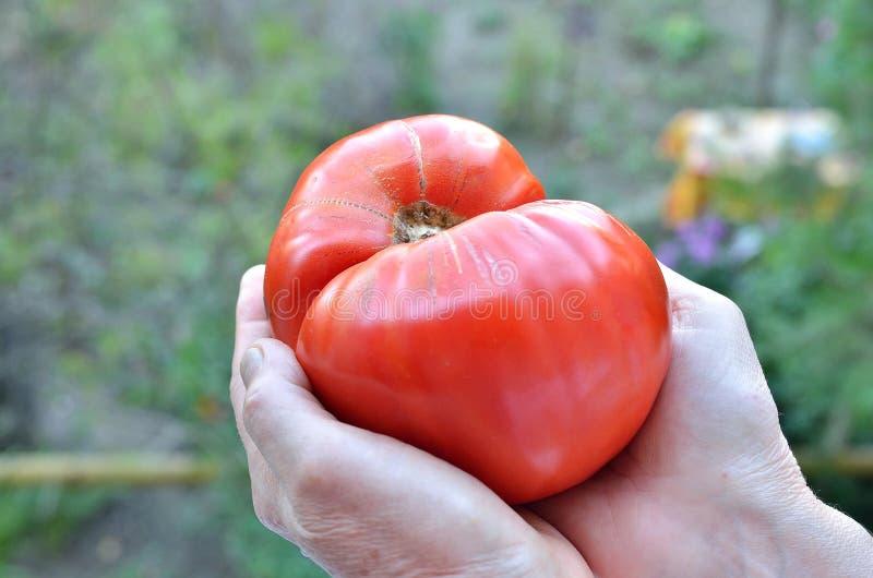 Факты и здоровое питание питания стоковая фотография