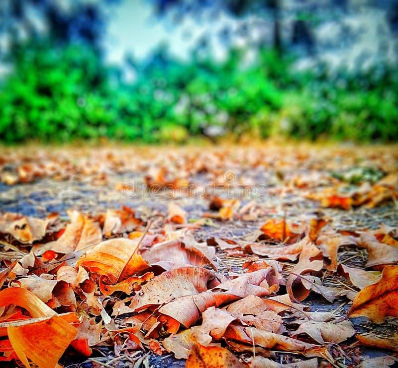 Фантазия листьев стоковое фото