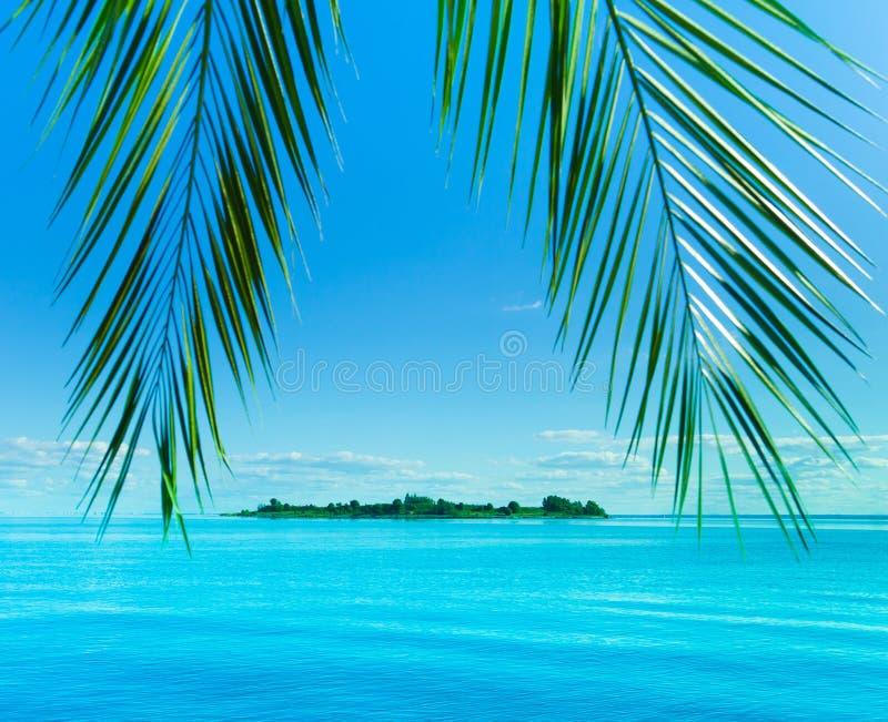 Download фантазия напольная стоковое фото. изображение насчитывающей коралл - 17619016