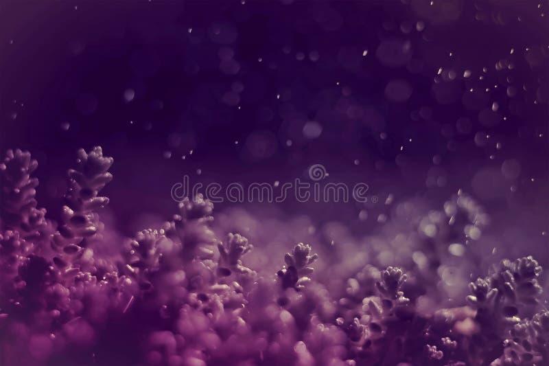 фантастическая абстрактная пурпурная съемка предпосылки крупного плана завода мха с падениями и тонизированным bokeh фото стоковые изображения rf