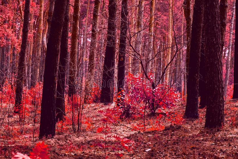 Фантастическая красная осень в лесе стоковые изображения rf
