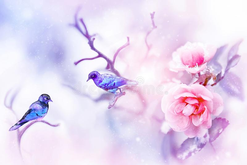 Фантастические красочные малые птицы и красивые розовые розы в снеге и заморозок на голубой и розовой предпосылке snowing стоковая фотография