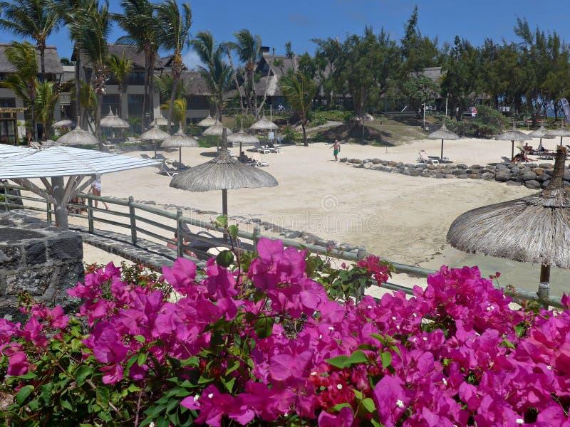 Фантастические розовые цветки на тропическом песчаном пляже, релаксации лета стоковое изображение