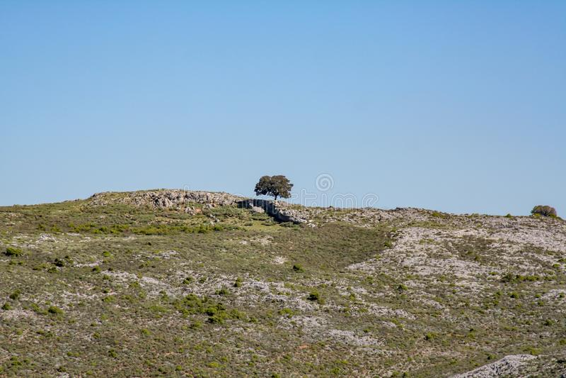 Фантастический вид над одиноким деревом стоковая фотография rf