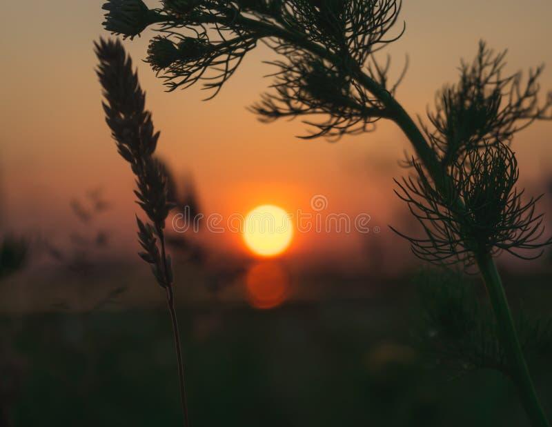 Фантастический выравниваясь ландшафт солнца устанавливая над полем стоковое фото rf
