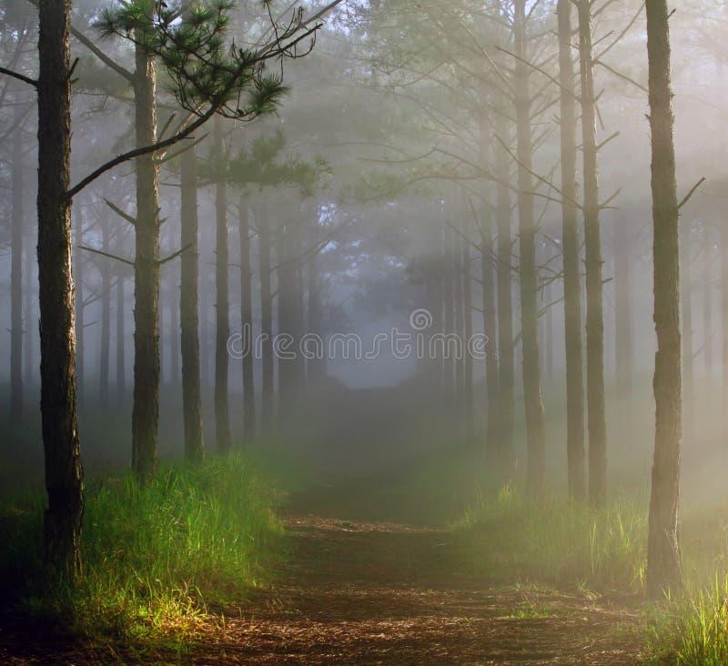 Фантастический лес с туманом и солнечным светом стоковая фотография rf