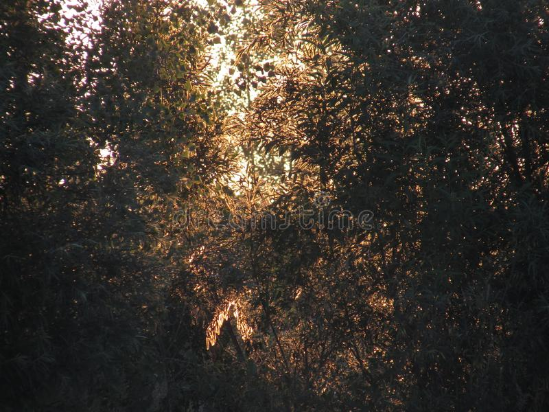 Фантастический красивый контур openwork солнечной золотой листвы кустов и деревьев в свете поднимая желтого солнца стоковые фотографии rf