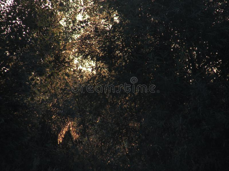 Фантастический красивый контур openwork солнечной золотой листвы кустов и деревьев в свете поднимая желтого солнца стоковое фото