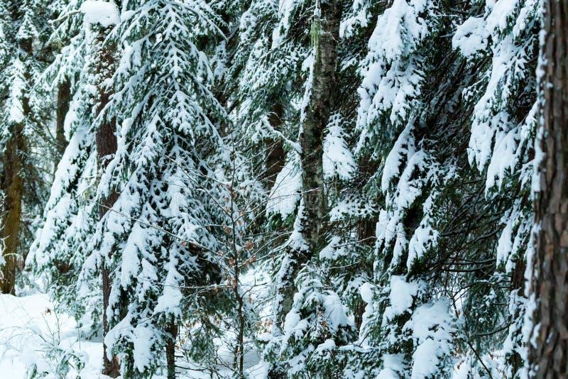Путешествие в зимний лес с фотоотчетом