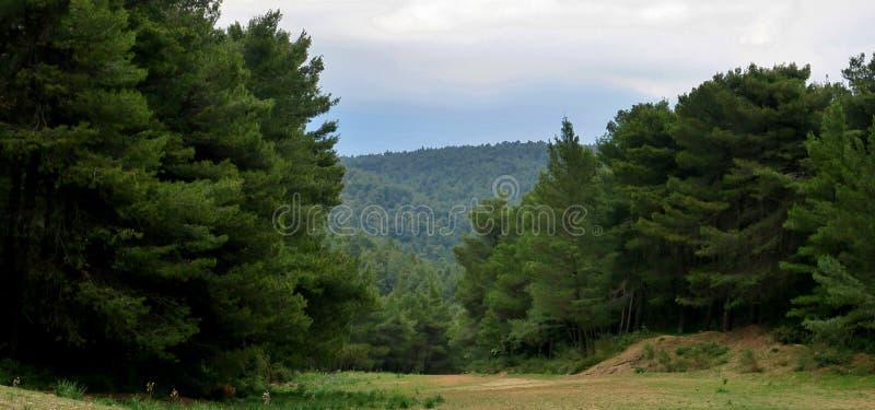 Фантастический лес с большими зелеными деревьями в чудесной Европе стоковые фотографии rf