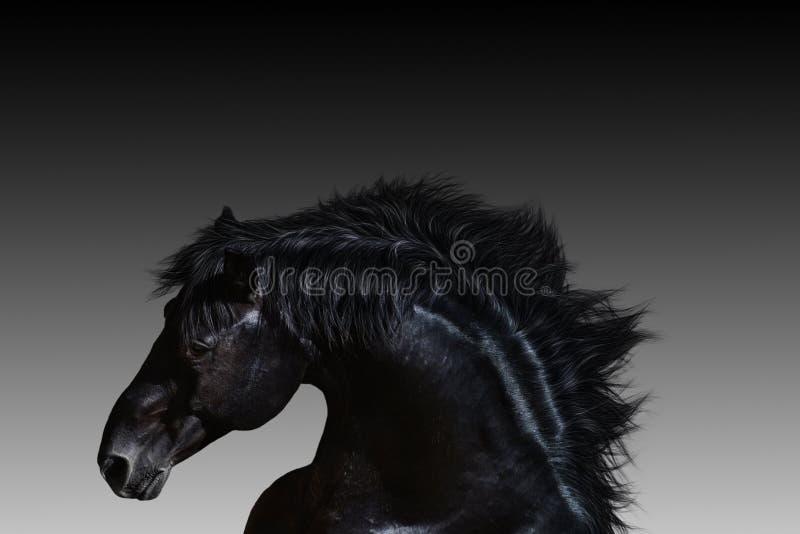 Фантастический момент Профиль красивого черного лошади конца вверх и теней серого цвета на заднем плане стоковые фото